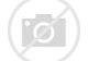 单枞树 的图像结果