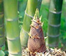 竹山特产 的图像结果