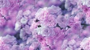 flowers, wallpaper, , rose, , blossom, , close