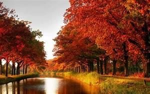 Autumn, Windows, 10, Theme