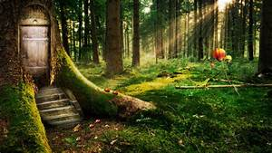 enchanted, forest, wallpapers