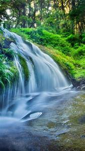 Wallpaper, Forest, 5k, 4k, Wallpaper, 8k, Rocks, Trees, Plants, Waterfall, River, Nature, 583