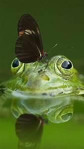 butterfly, standing, on, green, frog, 4k, 5k, hd, green, wallpapers