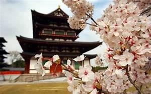 sakura, blossom