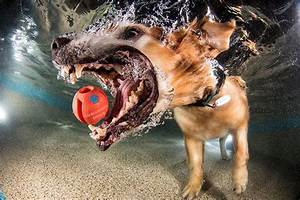 15, Hilarious, Photos, Of, Dogs, Trying, To, Fetch, A, Ball, Underwater, 7, Lol