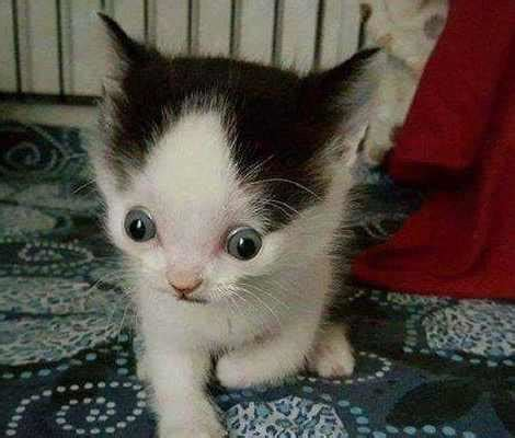 收养的猫咪生下了小奶猫,小奶猫长相特奇怪,检查过后泪都 ...