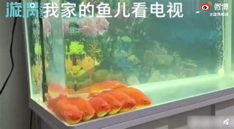 金鱼排成一排看电视